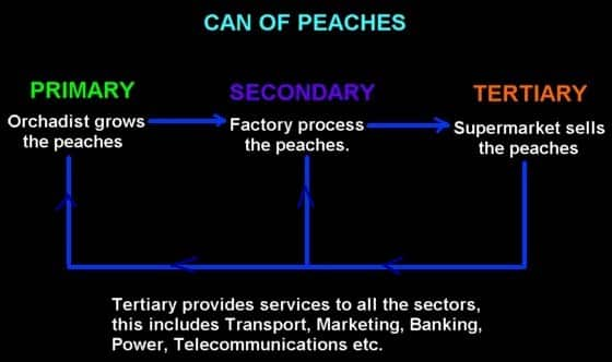 primary secondary tertiary sectors